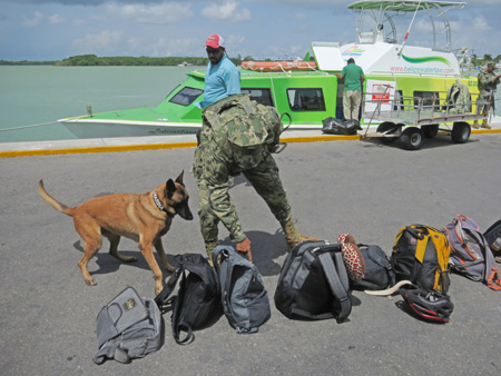 A drug-sniffing dog at the immigration office on the docks in Chetumal, Mexico.