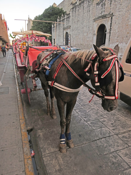 A horse drawn carriage in Merida, Mexico.