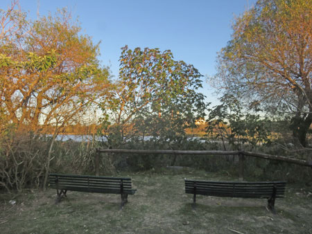 Two benches in the Reserva Ecologica Costanera Sur in Buenos Aires, Argentina.
