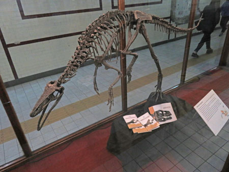 A dinosaur skeleton on display in a subway station in Buenos Aires, Argentina.