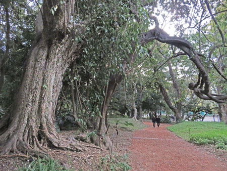 An arboreal arch at the Jardin Botanico in Palermo, Buenos Aires, Argentina.