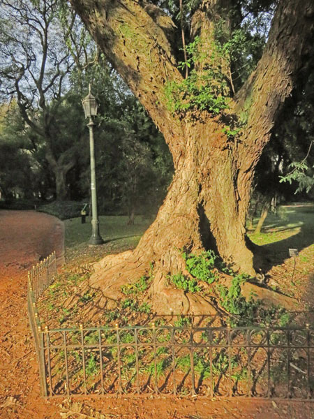 A sun-splashed tree at the Jardin Botanico in Palermo, Buenos Aires, Argentina.