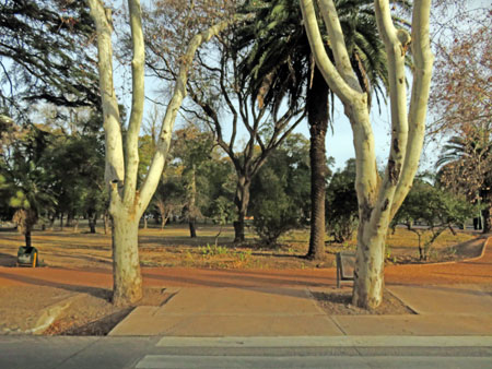 A collection of trees in Parque General San Martin, Mendoza, Argentina.