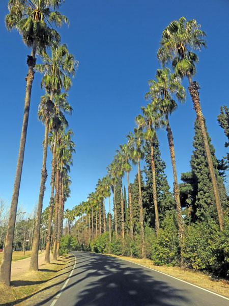 A parade of palms at Parque San Martin in Mendoza, Argentina.
