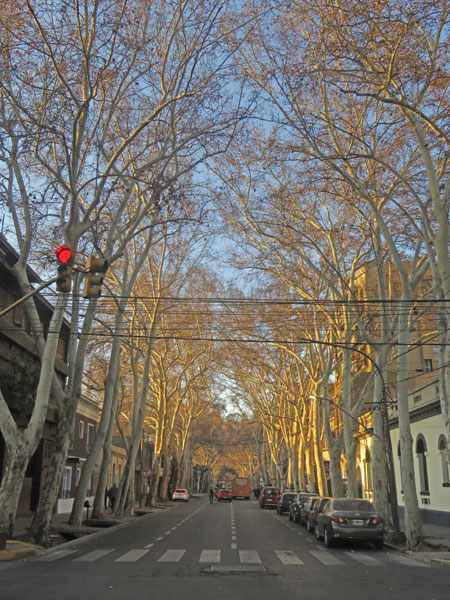 A tree-lined street at sunset in Mendoza, Argentina.