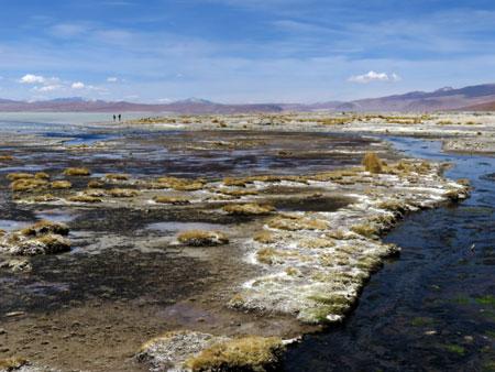 The complex textures of myriad minerals covering a salt lagoon at Polques Aguas Terminales in the Reserva Nacional de Fauna Andina Eduardo Avaroa, Bolivia.