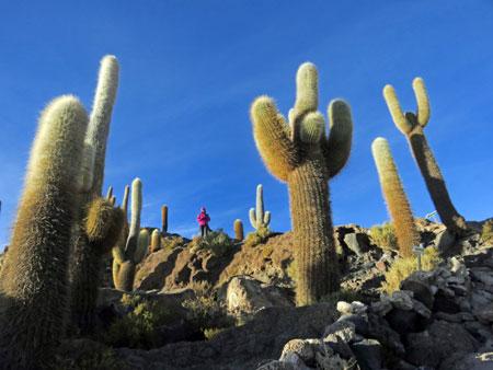 Cat stands among the cacti on Isla Incahuasi in the Salar de Uyuni, Bolivia.