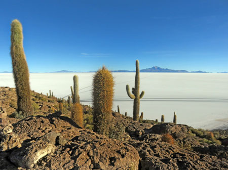 A view from on high of the cactus-covered Isla Incahuasi on the Salar de Uyuni, Bolivia.