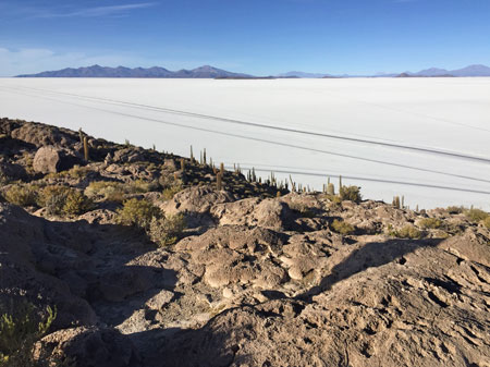 A view from the top of Isla Incahuasi on the Salar de Uyuni, Bolivia.