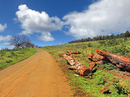 The road up the slope of the Rano Kau volcano near Hanga Roa, Rapa Nui, Chile.