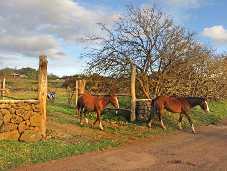 Horses run free near sunset on Rapa Nui, Chile.