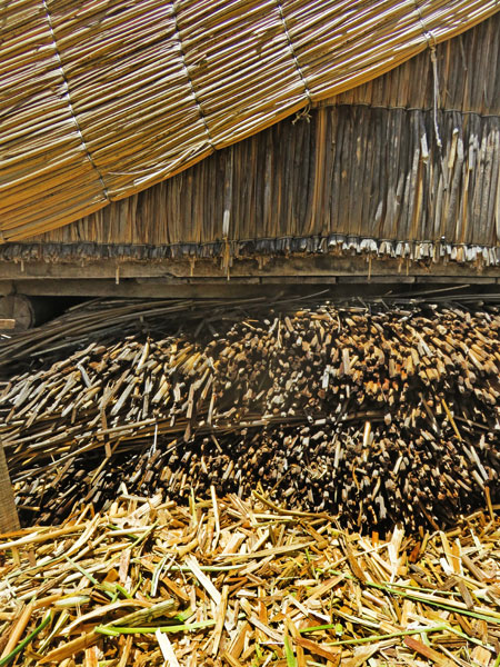 A close-up of the totora reeds that are used to build everything on the Uros Islands near Puno, Peru.